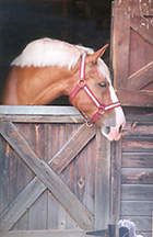 [color photograph of horse]