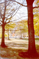 [color photograph of trees near Murphy Courts of Appeal Building entrance]